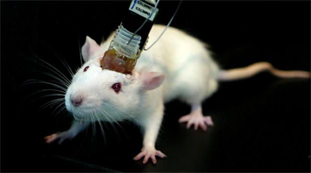 rat-mind-control-deon-vs-earth